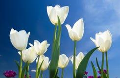 banner tła kwiaty form różowego spiralę trochę Obraz Royalty Free
