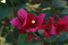 banner tła kwiaty form różowego spiralę trochę Zdjęcie Royalty Free