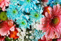 banner tła kwiaty form różowego spiralę trochę Obrazy Royalty Free