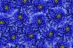 banner tła kwiaty form różowego spiralę trochę Błękit kwitnie chryzantemę Zakończenie kwiecisty kolaż tła składu powoju kwiatu tu Zdjęcie Royalty Free
