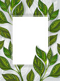 Banner with tea leaves Royalty Free Stock Photos