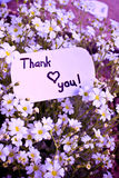 Banner with thank you Stock Photography