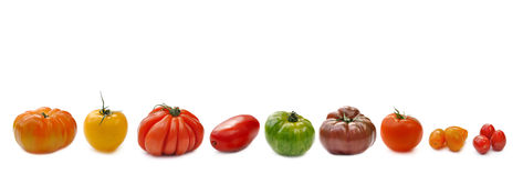 Banner of tomatoes. Collection of tomatoes aligned and isolated on white background Royalty Free Stock Photography