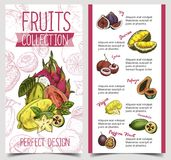 Banner with tropical and exotic summer fruits Royalty Free Stock Photo