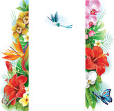 Banner from tropical flowers and leaves Stock Image