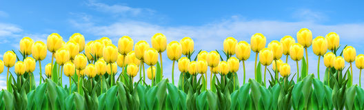 Banner with tulips Royalty Free Stock Photography