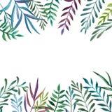 Banner van het waterverf de botanische kader Stock Foto