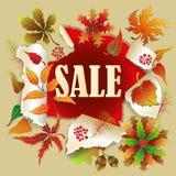 Banner voor de Herfstverkoop met kleurrijke seizoengebonden dalingsbladeren en lijsterbes voor het winkelen kortingsbevordering V royalty-vrije illustratie