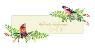 Banner with watercolor colorful bird and some leaves, berries Royalty Free Stock Photography