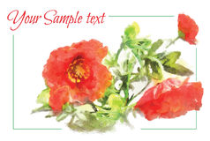 Banner watercolor painting with bouquet of red poppies Stock Images