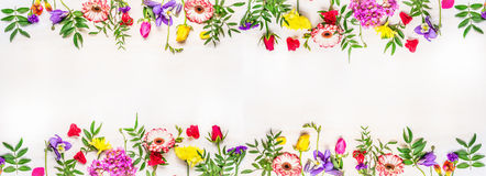 Banner for the web site, various multicolored spring flowers, space  text, top view Stock Photography