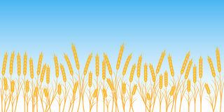 Banner wheat field on blue sky background. Vector concept of harvest and agriculture Ukraine Stock Image