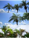 Banner Wild. Trees and blue sky with clouds Royalty Free Stock Images