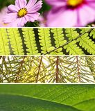 Banner Wild. Four leaf photos put them together Stock Image