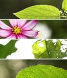 Banner Wild. Four leaf photos put them together Stock Images