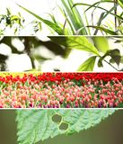 Banner Wild. Four leaf photos put them together Royalty Free Stock Images