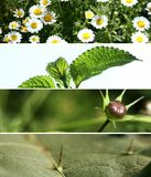 Banner Wild. Four leaf photos put them together Royalty Free Stock Photo