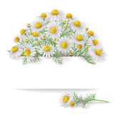 Banner with Wild Chamomile Bunch. Royalty Free Stock Photography
