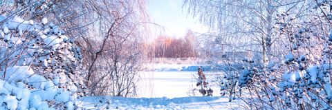 Banner 3:1. Winter landscape. Winter road and trees covered with snow. Sky and sunlight through the frozen tree branches. Copy. Space. Soft focus royalty free stock photo