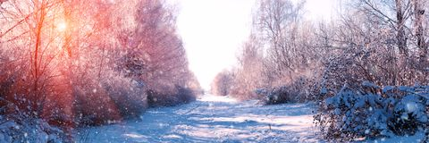 Banner 3:1. Winter landscape. Winter road and trees covered with snow. Sky and sunlight through the frozen tree branches. Copy stock photos