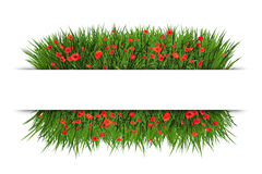 Free Banner With Green Grassand Red Poppy Stock Photography - 48313142
