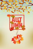 Banner with the words autumn. Autumn leaves background.  Royalty Free Stock Image