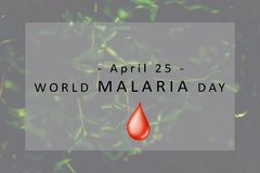 World Malaria Day concept. Banner World Malaria Day concept Royalty Free Stock Photography
