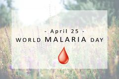 World Malaria Day concept. Banner World Malaria Day concept Royalty Free Stock Images