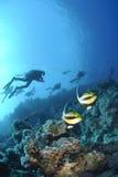 Bannerfish del Mar Rojo con las siluetas de los zambullidores de equipo de submarinismo. Imagen de archivo libre de regalías
