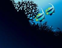 Bannerfish i koraller Royaltyfria Bilder