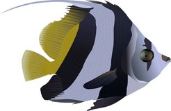 bannerfishlongfin Royaltyfria Bilder