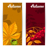 Banners with autumn leaves and plants. Design for advertising booklets, banners, flayers, cards.  Stock Image