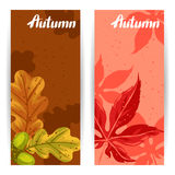 Banners with autumn leaves and plants. Design for advertising booklets, banners, flayers, cards.  Stock Photo