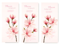 Banners with beautiful cherry blossom flowers. Stock Photography