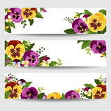 Banners with colorful pansy flowers. Vector illustration. Royalty Free Stock Photography
