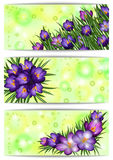 Banners with crocus flowers. Illustration of banners with purple crocus flowers Royalty Free Stock Photo