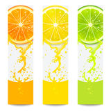 Banners with Fresh Citrus Fruit Royalty Free Stock Photography