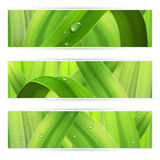 Banners with grass Royalty Free Stock Image