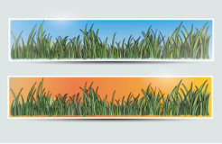 Banners with grass and sun. Vector illustration of banners with grass and sun, backgrounds Stock Image