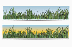 Banners with grass and sun. Vector illustration of banners with grass and sun, backgrounds stock illustration