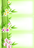 Banners with green bamboo and flowers Stock Photo