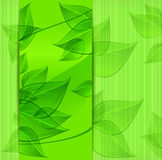 Banners with green leaves Stock Photo