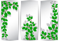 Banners with green leaves Royalty Free Stock Photo