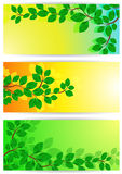 Banners with green leaves Royalty Free Stock Photos