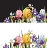 Banners with Iris flowers Stock Photo