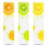 Banners with Juicy Citrus Fruits. On white background royalty free illustration