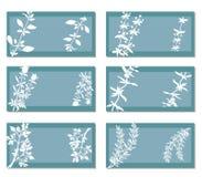Banners met Aromatische Kruiden vector illustratie