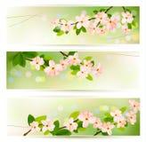 banners met tot bloei komende boombrunch Royalty-vrije Stock Afbeeldingen