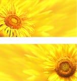Banners met zonnebloemen Stock Afbeeldingen