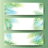 Banners with the palm tree branches. Stock Photos